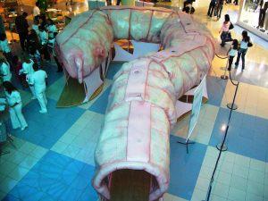 Exposição do Intestino Gigante